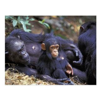 Carte Postale L'Afrique, Afrique de l'Est, Tanzanie, femelle de