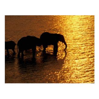 Carte Postale L'Afrique, Botswana, delta d'Okavango. Africain