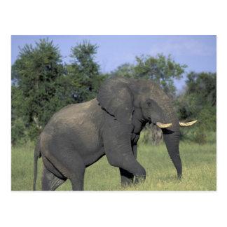 Carte Postale L'AFRIQUE, Botswana, parc national de Chobe,