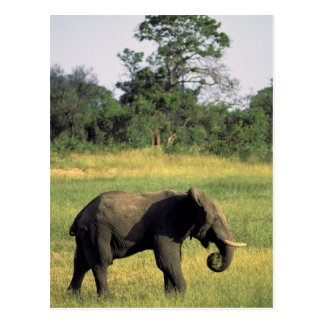 Carte Postale L'Afrique, Botswana, parc national de Chobe.