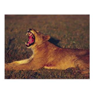 Carte Postale L'Afrique, Botswana, réservation de faune de