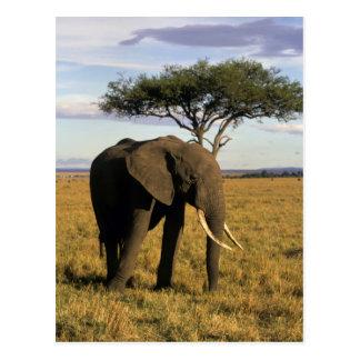 Carte Postale L'Afrique, Kenya, Maasai Mara. Un elehpant dans