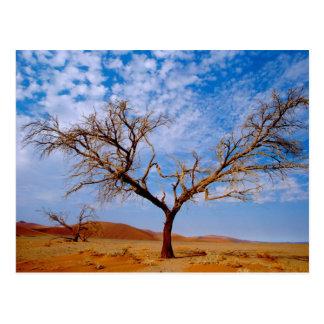 Carte Postale L'Afrique, Namibie, parc national de Naukluft,