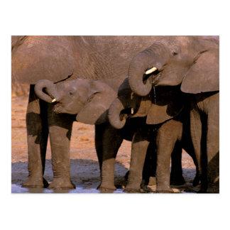 Carte Postale L'Afrique, Tanzanie, parc national de Tarangire