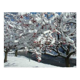Carte Postale Laissez lui neiger, laissez-le neiger, laissez la