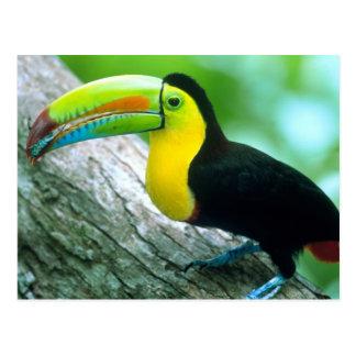 Carte Postale L'AMÉRIQUE CENTRALE, Panama, île 2 de Borro le