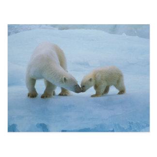 Carte Postale L'Amérique du Nord, Arctique canadien. Ours blanc
