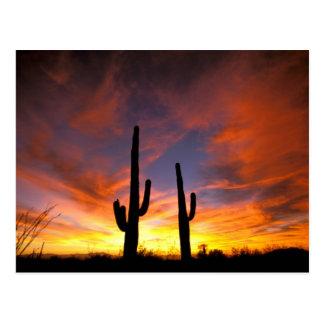 Carte Postale L'Amérique du Nord, Etats-Unis, Arizona, désert de