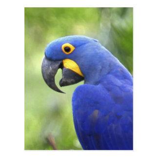 Carte Postale L'Amérique du Sud, Brésil, Pantanal. Mis en danger