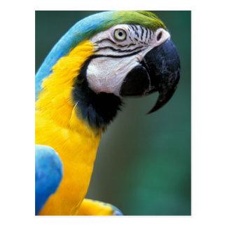 Carte Postale L'Amérique du Sud, Brésil, parc d'Iguacu Natioanl,