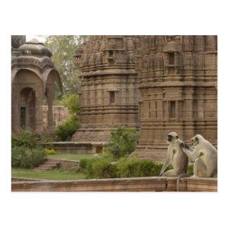 Carte Postale Langurs de Hanuman ou Noir-fait face, terrain