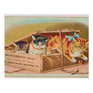 Carte Postale L'annonce de savon de chatons la plus mignonne