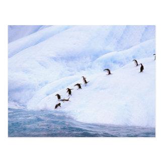 Carte Postale L'Antarctique, péninsule antarctique. Jugulaire