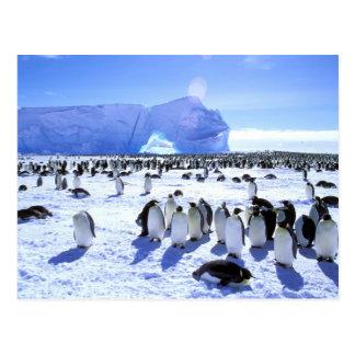 Carte Postale L'Antarctique, péninsule antarctique, mer de