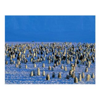 Carte Postale L'Antarctique, territoire antarctique australien,