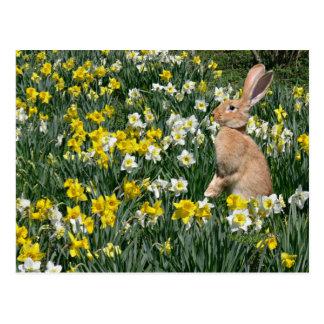 Carte Postale Lapin de Pâques