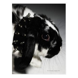 Carte Postale Lapin noir et blanc avec le collier clouté