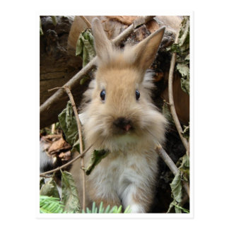 Carte Postale Lapin, rabbit