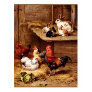 Carte Postale Lapins d'animaux de ferme de poules de coq de