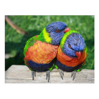 Carte Postale L'arc-en-ciel Lorikeet parrots des couples