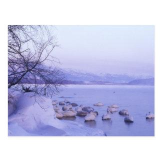 Carte Postale L'Asie, Japon, Hokkaido, Akan NP, cygnes de gros
