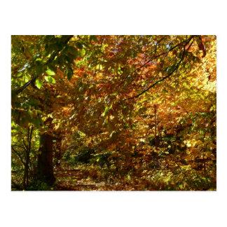 Carte Postale L'auvent de l'automne laisse à II la photographie