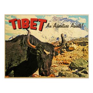 Carte Postale L'aventure du Thibet attend le boeuf