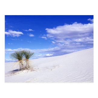 Carte Postale Le blanc ponce le nanomètre, Nouveau Mexique,