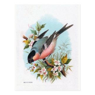 """Carte Postale """"Le bouvreuil """""""