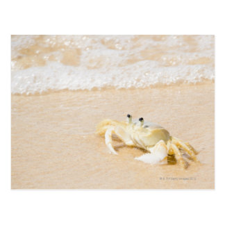 Carte Postale Le Brésil, Rio de Janeiro, Buzios, crabe dessus