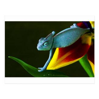 Carte Postale Le caméléon extraordinaire