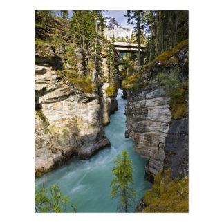 Carte Postale Le Canada, Alberta, parc national de jaspe,