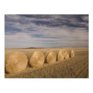 Carte Postale Le Canada, Saskatchewan, Craik : Hayrolls/automne