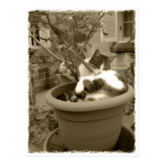 Carte Postale Le Cat is taking a nap dans un a projette pot