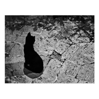Carte Postale Le Chat Noir