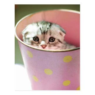 Carte Postale Le chaton se cachent dans le seau de sucrerie
