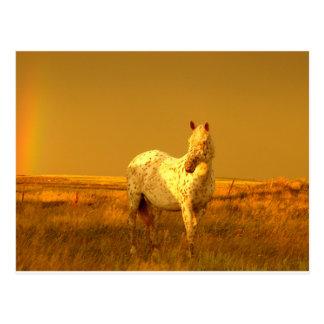 Carte Postale Le cheval repéré dans la lueur d'or d'une prairie