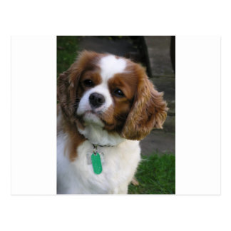 Carte Postale Le chien le plus mignon au monde