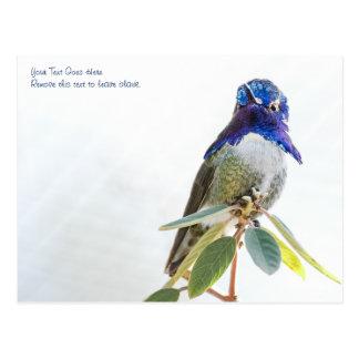 Carte postale : Le colibri de la côte