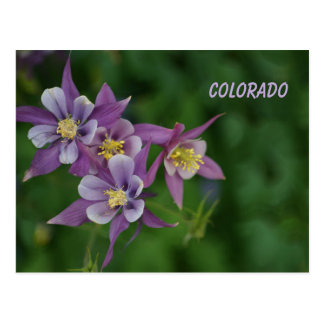 Carte Postale Le Colorado Columbine bleu
