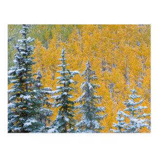 Carte Postale Le Colorado, MESA grand. Chutes de neige tôt sur