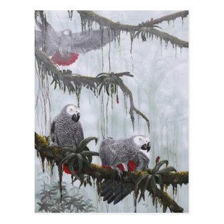 Carte Postale Le gris africain Parrots voler librement