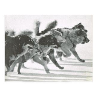 Carte Postale Le Groenland vintage, équipe de chien dans la