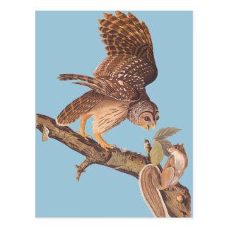 Carte Postale Le hibou barré d'Audubon et les amis heureux