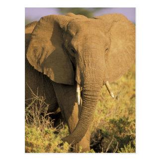Carte Postale Le Kenya, réservation nationale de Samburu.