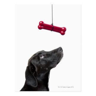 Carte Postale Le laboratoire noir a mélangé le chien à l'os de