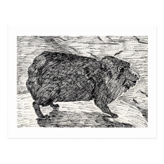 Carte Postale Le lapin, ou Hyrax de roche syrien