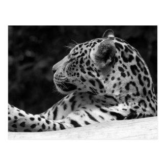 """Carte Postale """"Le léopard de réveil """""""
