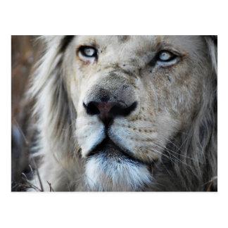 Carte Postale Le lion écoute mon battement de coeur