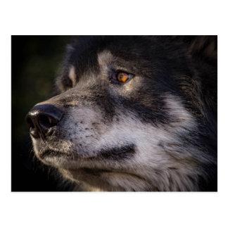 Carte Postale Le loup
